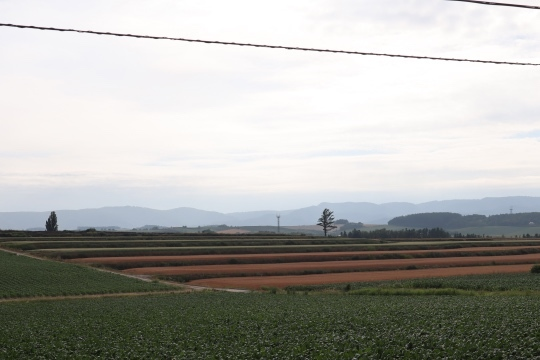 furano314.jpg