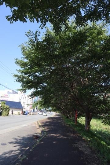 haibara86_Fotor.jpg