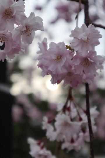 shiga413_Fotor.jpg